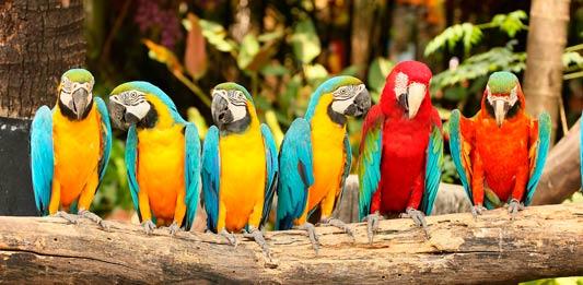 Avistamiento de aves exoticas